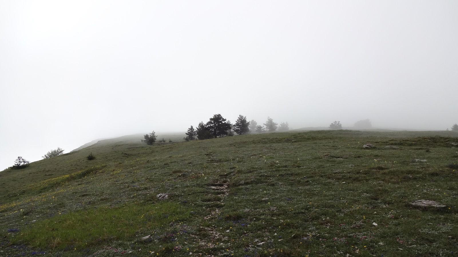 Montagne de l'Aup